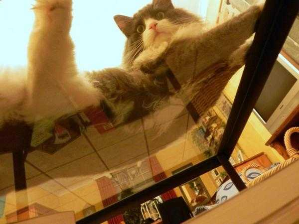 Cats on Glass Tables - Why is it here if not for sits?