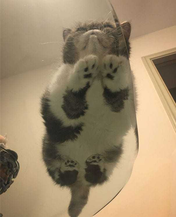 Cats on Glass Tables - Not even noticing you.