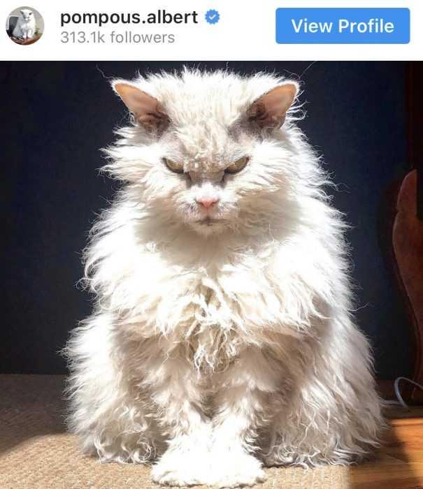 Floofy Animals - Floofy Cat 5