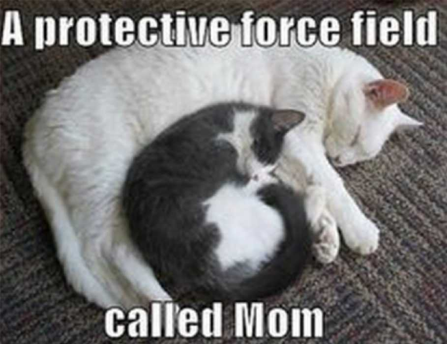 mothers day memes - mom meme about how mom is a protective shield