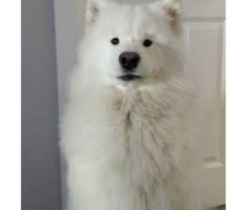 Floofy Animals - Floofy Doggy