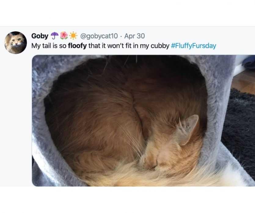 Floofy Animals - Floofy Cat