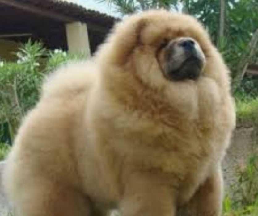 Floofy Animals - Floofy Doggo 6