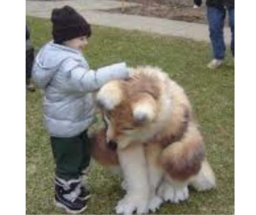 Floofy Animals - Floofy Doggo 4