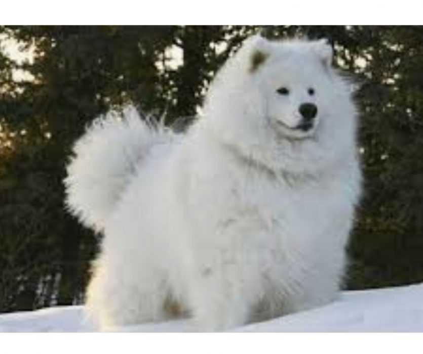 Floofy Animals - Floofy Doggo2