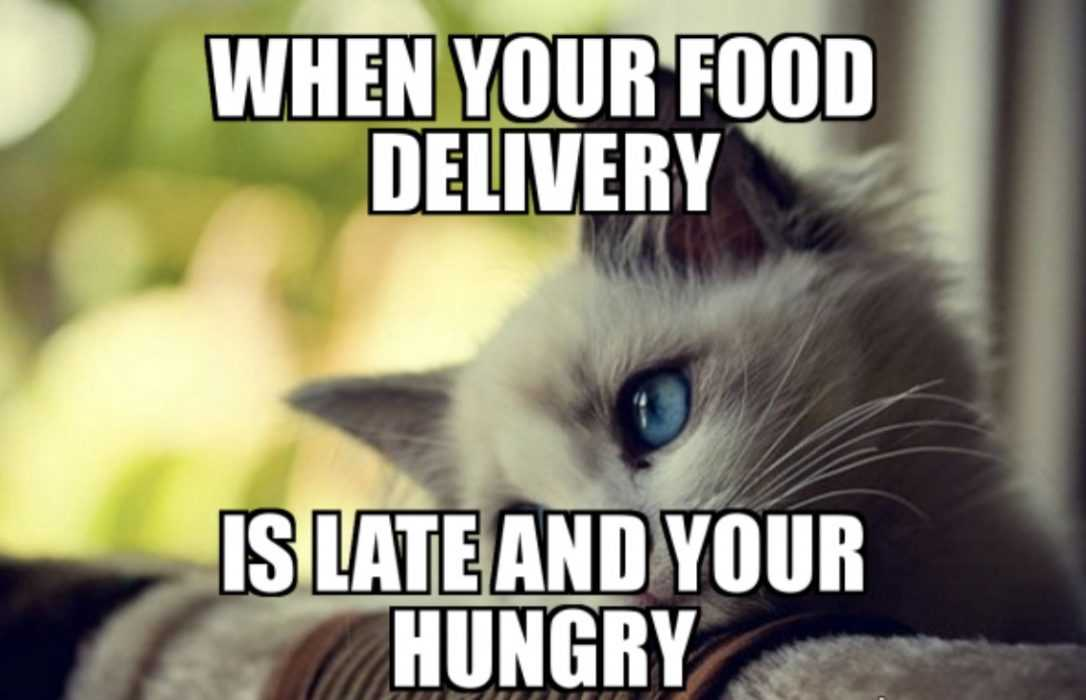 meme of cat looking sad when food delivery is late and you're hungry