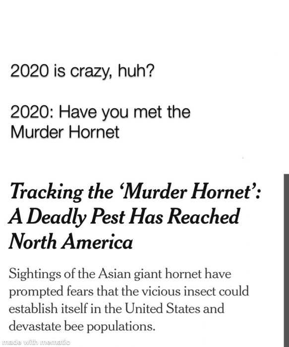 meme featuring someone saying 2020 is crazy and 2020 replying with have you met the murder hornet