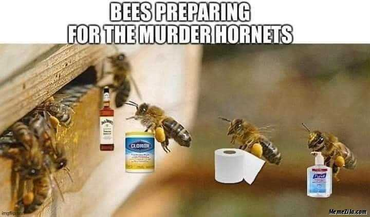 meme featuring honey bees hoarding alcohol, toilet paper and lysol to prepare for murder hornets
