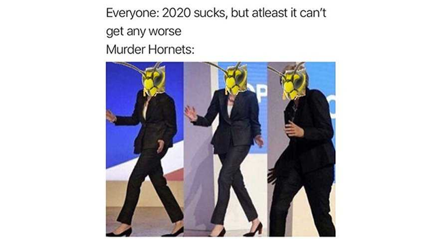 meme featuring a murder hornet waltzing onto stage when everyone thinks 2020 can't get worse
