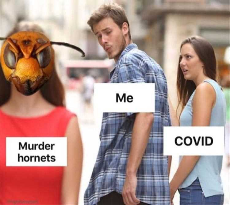 meme featuring a man dating covid 19 turning to gawk at murder hornets