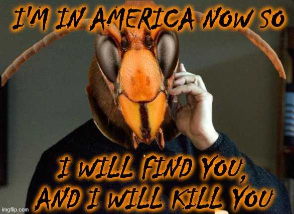murder hornet meme showing a murder hornet saying he's in america now and he will find and kill you