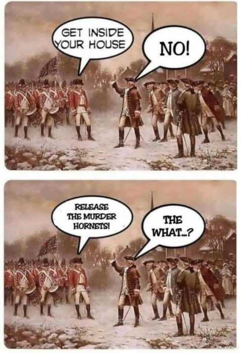 meme featuring english releasing murder hornets to quell the american uprising when they refused to obey stay at home orders