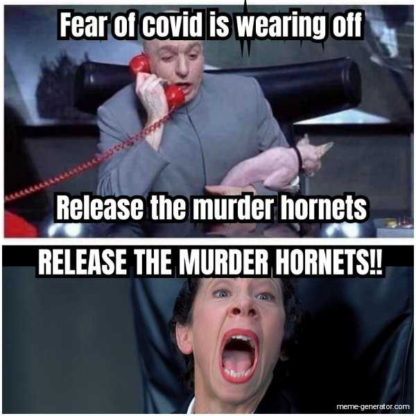meme featuring dr. evil commanding murder hornets to be released as he receives news that fear of covid is wearing off