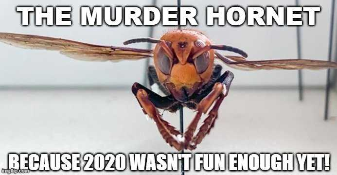 meme featuring a murder hornet captioned with because 2020 wasn't fun enough yet