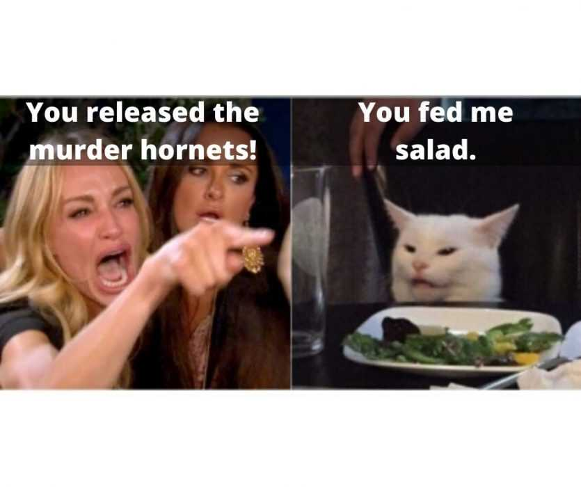 woman yelling at cat meme murder hornet version