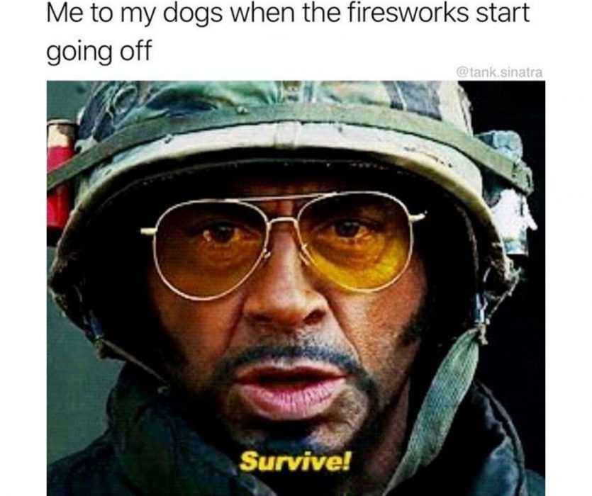 robert downey jr telling dog to survive through fireworks on fourth of july meme