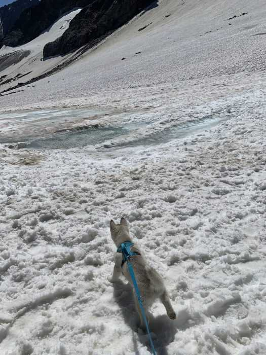 luna the husky puppy taking in the glacier