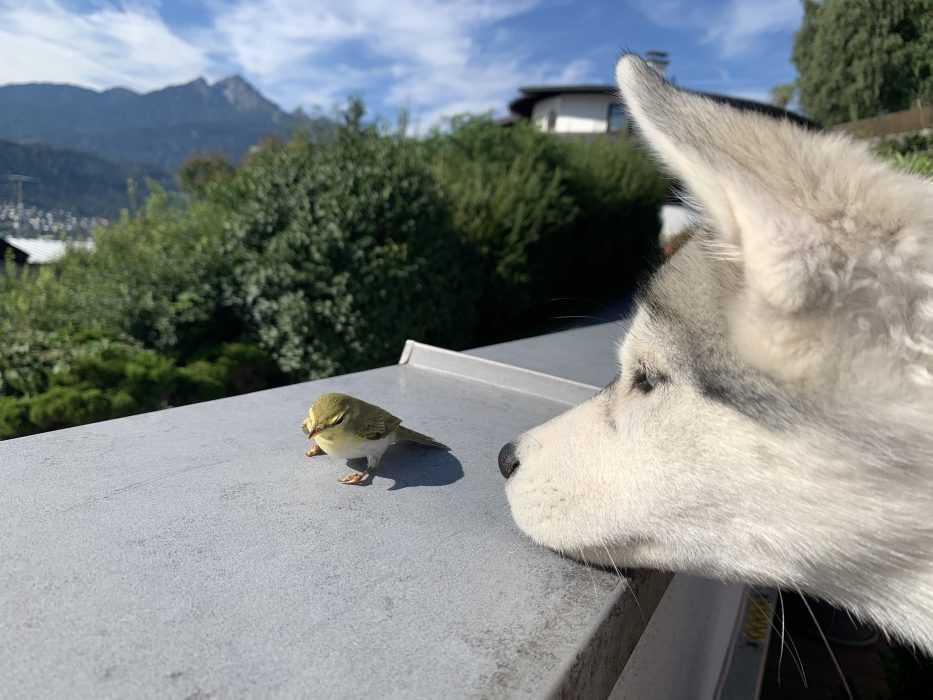 luna meets a bird