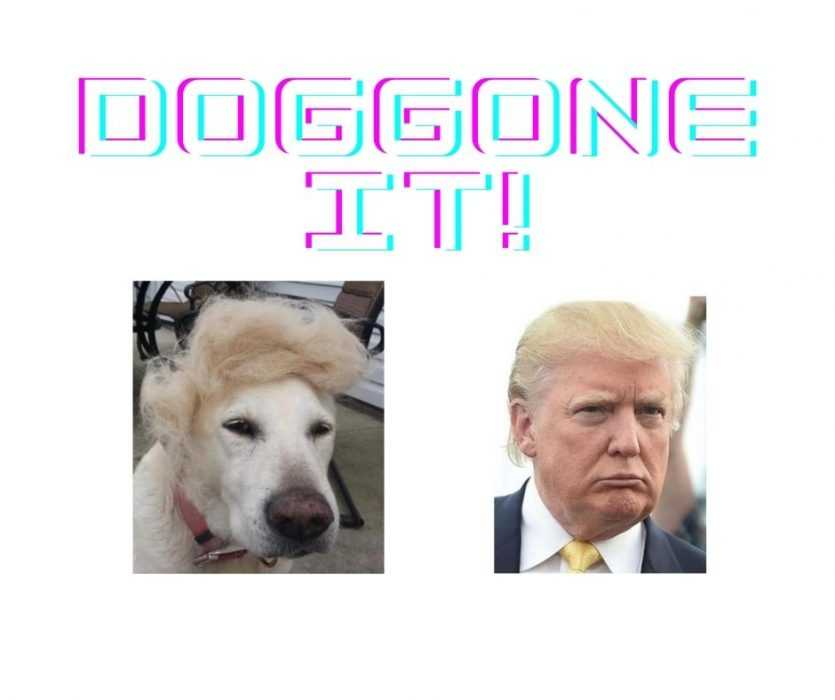 Dog with Donald Trump Hairdo looks Funny next to Trump