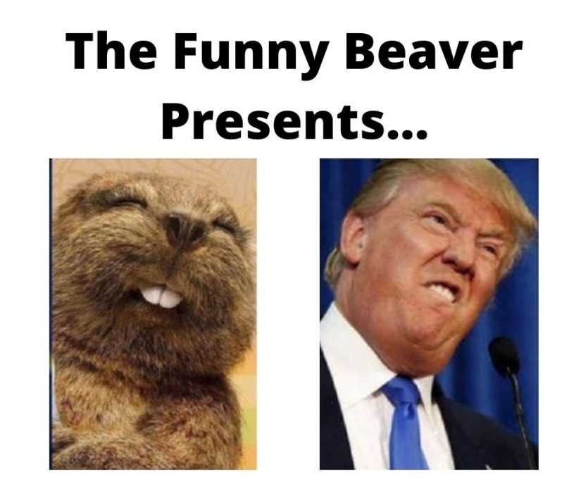 Funny beaver trumps looks in this picture?