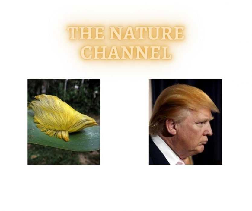 Trump Next To A Funny Animal That Looks Like Trump's Hair