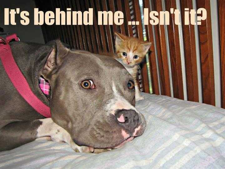 cute picture of a dog looking uneasily with a small kitten behind his head