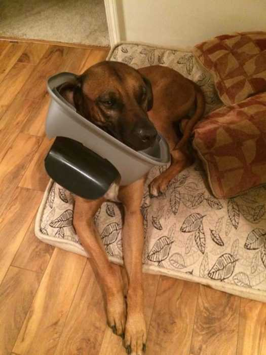 A funny dog lying on a dog bed with his front paws through the lid of a trash can