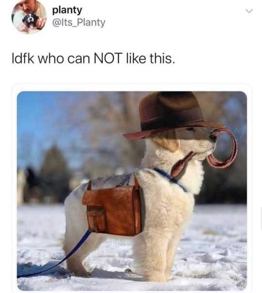 cute picture of a cute dog wearing a briefcase and top hat in the snow