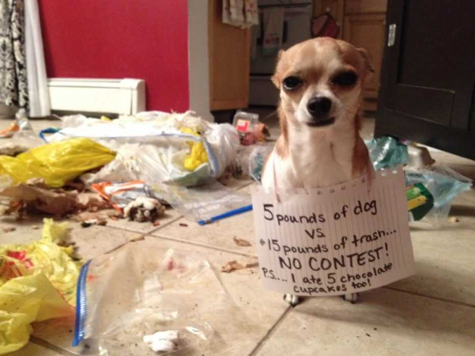 A dog sitting on a tile floor wearing a funny dog shaming sign saying he ate 15 pounds of trash