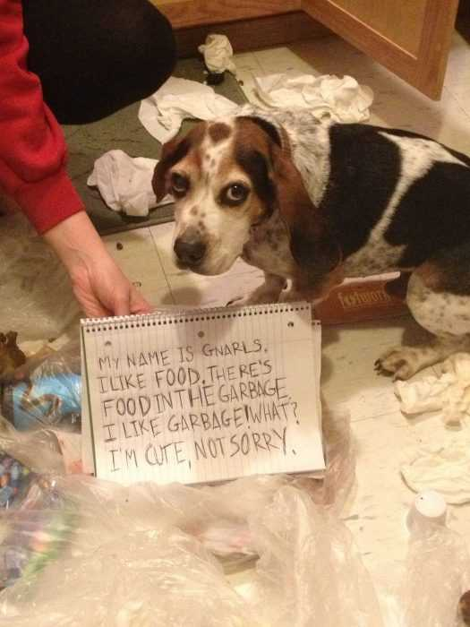 A dog that is standing in front of a funny dog shaming sign for throwing trash on the floor