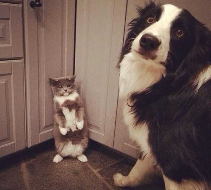 A cat sitting next to a dog