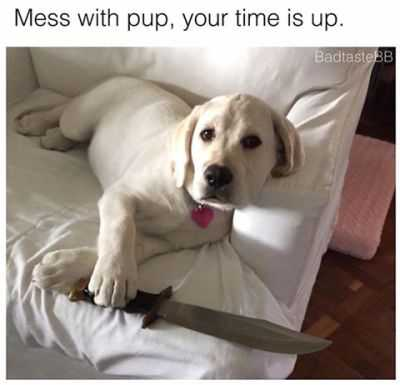 beige labrador dog sitting on sofa with one paw on a small sword