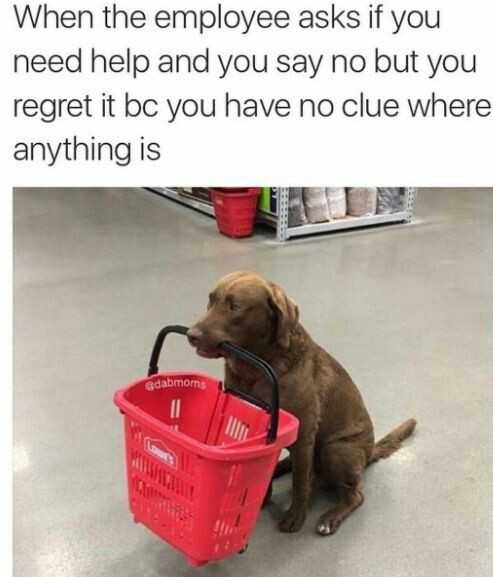 cute picture of a brown labrador dog holding a shopping basket