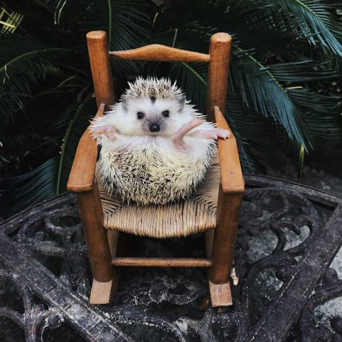 cute hedge hog rolled up in its own rocking chair