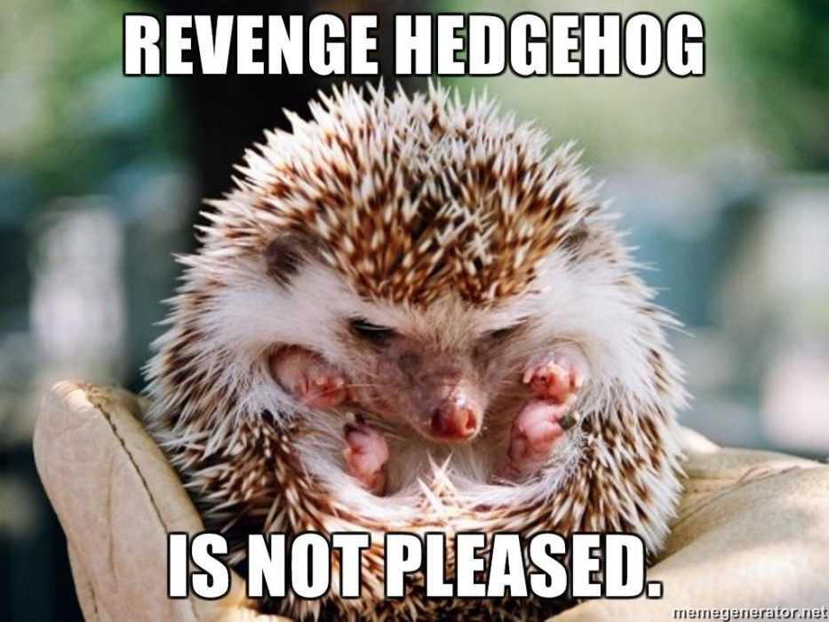 cute hedge hog looking angry rolled up in defensive position