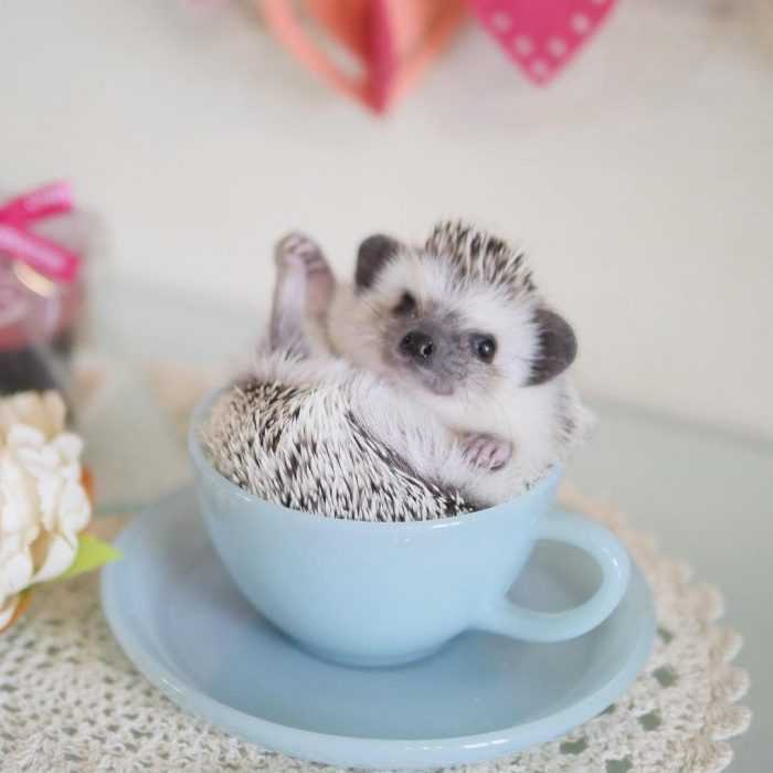 cute picture of a hedgehog in a teacup