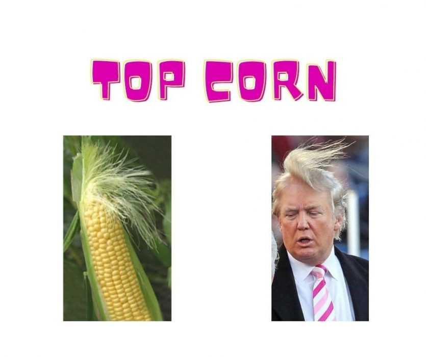 Cornstalk Looks Just Like Donald's Hair