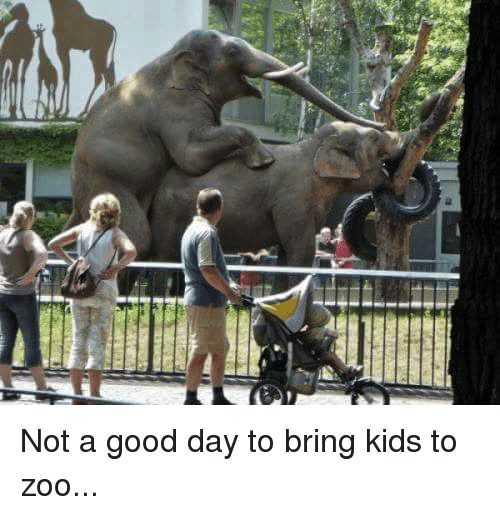 Funny Animal Memes elephants doing the deed