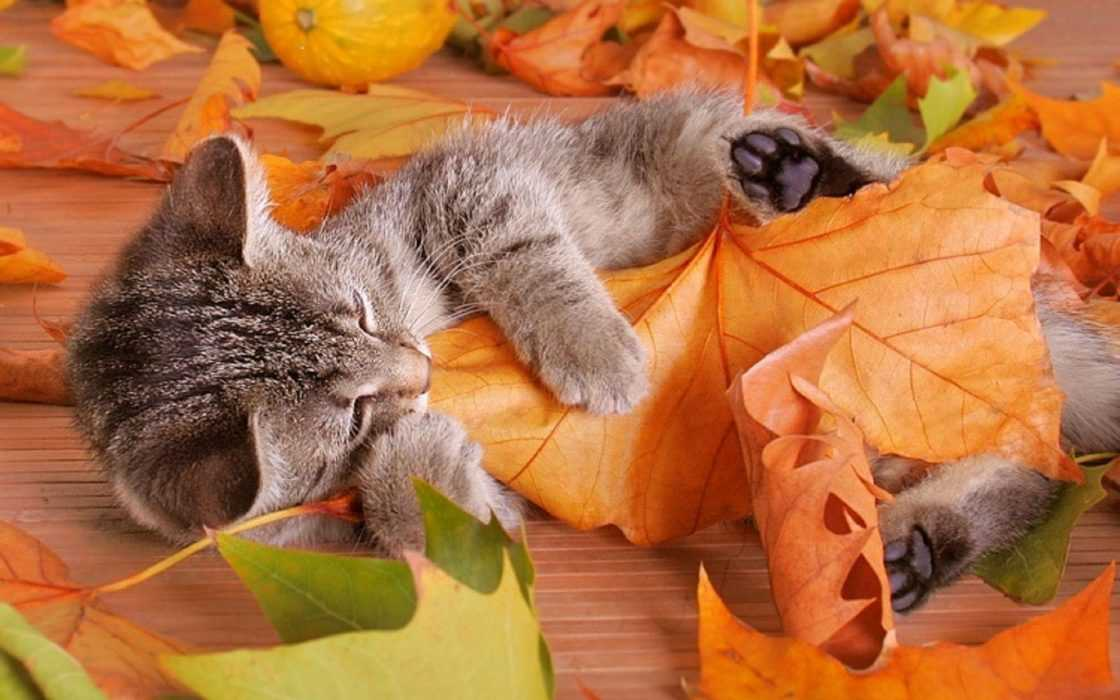 Cute fall animal pictures - cat cuddling with leaf