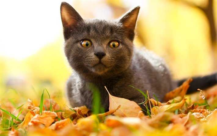 Funny fall animal images - cat stalking a leaf