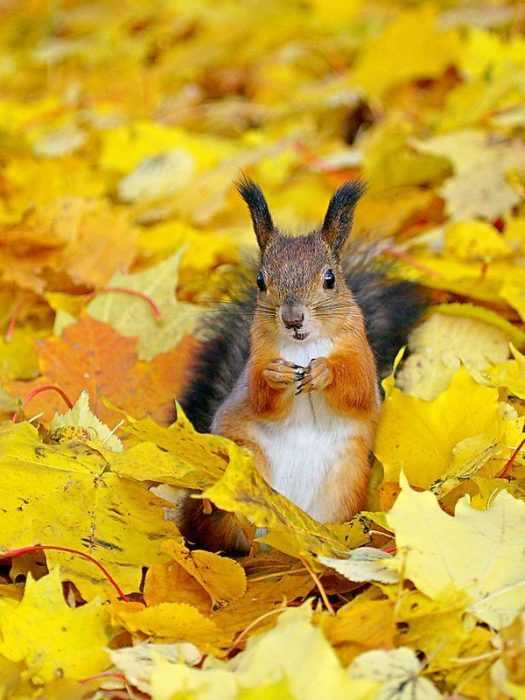 Funny fall animal memes - squirrel in leaves ready to discuss terms
