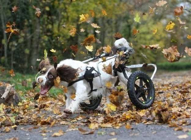 Funny fall animal memes - dog attacking falling leaves
