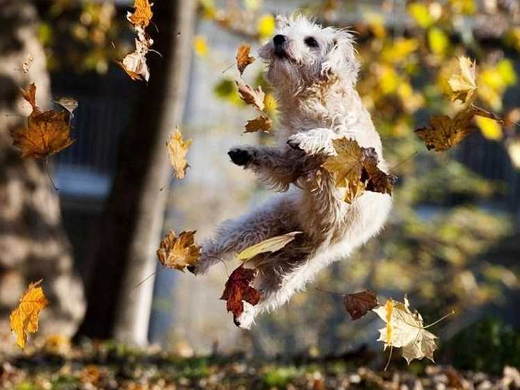 Funny fall animal memes - dog tapping hind ankles in joy