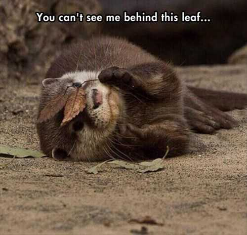 Funny fall animal images - otter playing peekaboo