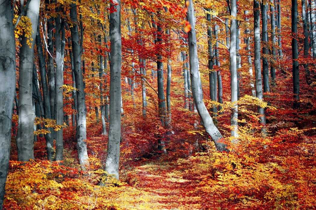 fall activities for kids - leaf peeping