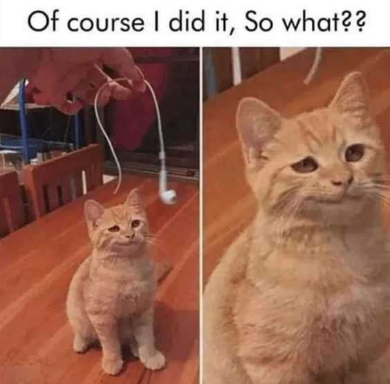 Cat Showing Guilty Look After Being Shown A Broken Airpod