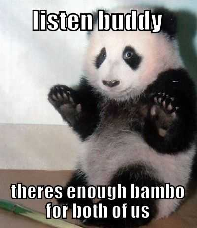 Panda Trying To Calm Down A Bamboo Fight