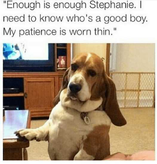 Funny Cats And Dogs - This Dog Seriously Wants To Know Who's A Good Boy