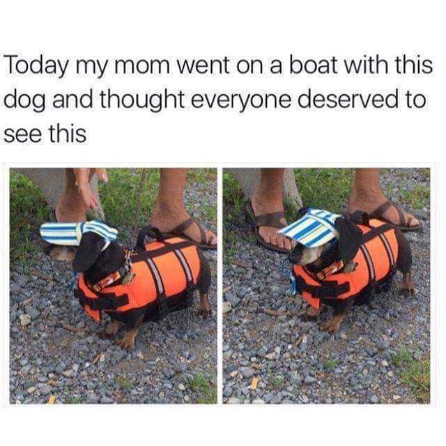 Dog Perfectly Dressed For A Boat Trip