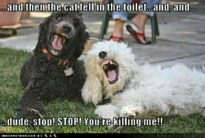 Funny Cats And Dogs - Two Dogs Sharing A Cat Joke